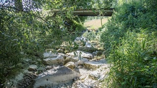 Kein Wasser für Thurgauer Landwirte