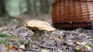 «Pilz-Apps gaukeln eine falsche Sicherheit vor»