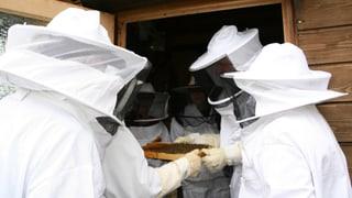 Der Trend Imkern setzt Bienenfleiss voraus