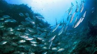 Video «Meerfisch oder weniger?» abspielen
