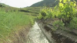 Gift aus der Landwirtschaft im Wasser: Lesen Sie hier, wieso die Behörden ein hohes Risiko in Kauf nehmen.