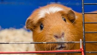 Tierhaltung in einigen Zoofachgeschäften verstösst gegen Gesetz