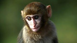 Affenversuch: Zürcher Tierschützer kämpfen weiter