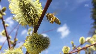 Rund 300 Aargauer Bauernbetriebe arbeiten bienenfreundlich