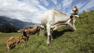 Artenreichtum auf Schweizer Alpen sinkt