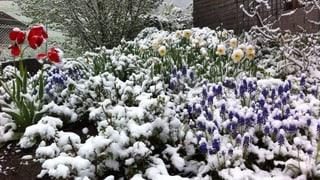Weisser Frühling – alles im grünen Bereich
