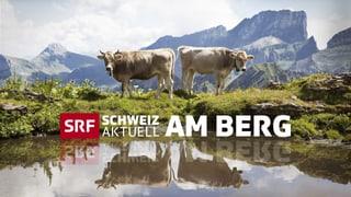 DVD Schweiz aktuell am Berg auf DVD