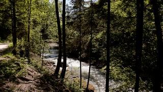 Mehr Schutzwald für den Kanton St. Gallen