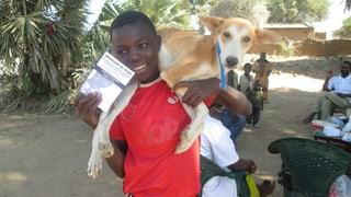 Tollwut: Impfung für 20'000 Hunde