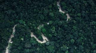 Staatlicher Fonds soll alle Amazonas-Schutzgebiete sichern