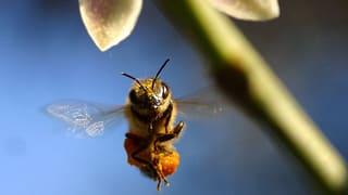 Markus Imhoofs Bienen-Epos «More than Honey» hat einiges losgetreten