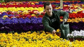 Gartenzentren profitieren von Frühlingsgefühlen