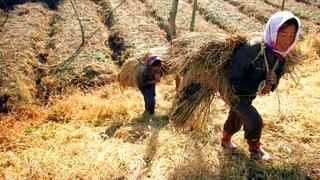 Die Wirtschaft wächst – der Hunger auch
