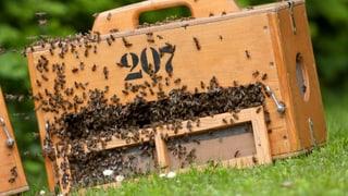 EU-Behörde kritisiert Syngenta: Insektizid gefährlich für Bienen
