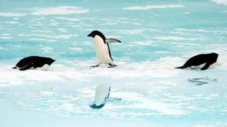 «Leinen los» für Schweizer Polar-Expedition
