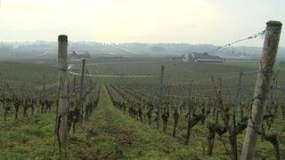 Illegal produzierter Wein belastet Waadtländer Winzer