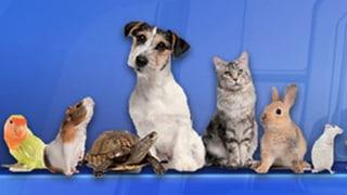 «Ganz tierisch»