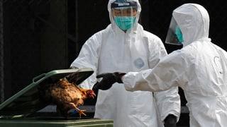 Vogelgrippe in China: Keine Übertragung von Mensch zu Mensch