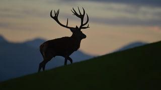 Jagdgeflüster und Jägerlatein