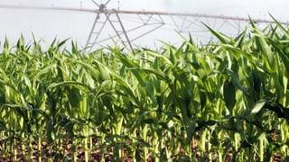 Regierung will keine genmanipulierten Äcker im Baselbiet