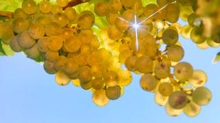 Quiz: Was wissen Sie über Wein in der Schweiz?