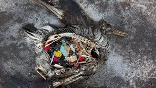Ein Meer aus Plastik – wie Kunststoff unsere Ozeane verseucht