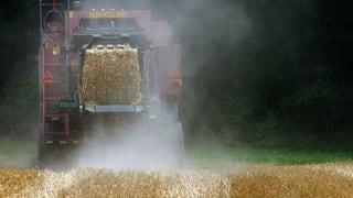 So wappnen sich Zürcher Bauern gegen die Hitze