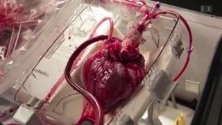 Organspende – Herz schlägt in der Box