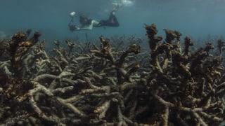 Im Great Barrier Reef wurden noch nie so viele abgestorbene Korallen gefunden wie bei der letzten wissenschaftlichen Untersuchung.