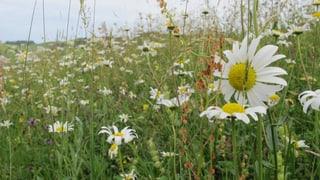 Die schönsten Wiesen im Appenzellerland
