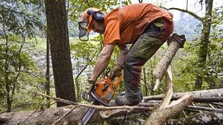 Aargauer Waldbesitzer sollen nicht mehr Geld erhalten