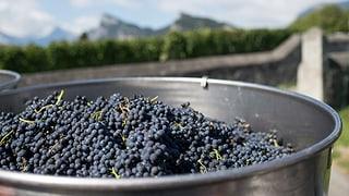 Grischun duai daventar Mecca da vin da bio