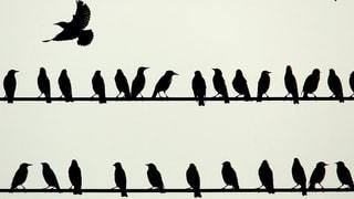 Alle Vögel sind schon da – eben nicht, warnen Experten