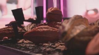 Video «Die Zukunft der Schokolade» abspielen