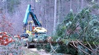 Im Baselbieter Wald wartet viel Arbeit