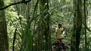 Video «Walden. Ein Kunstprojekt» abspielen