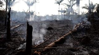In Brasilien brannte der Wald in diesem Jahr schon 72'000 Mal