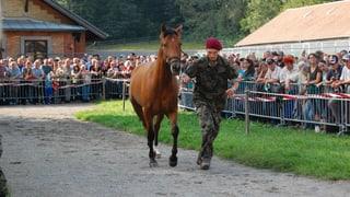 Die Hefenhofener Pferde sind verkauft