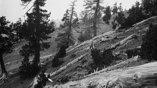 Video «100 Jahre Schweizerischer Nationalpark (4/6)» abspielen