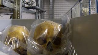 Roboter holt Totenschädel und Römerschmuck