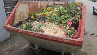 Aargauer Gärtnereien müssen tonnenweise Blumen wegwerfen