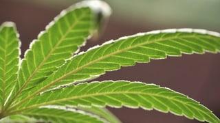 Beim Cannabis-Konsum wird mit unterschiedlichen Ellen gemessen