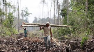 Nationalrat will Importverbot für illegal gefälltes Holz