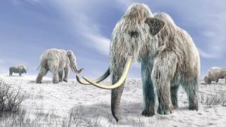 Tiere aus der Urzeit: Kommen sie zurück?