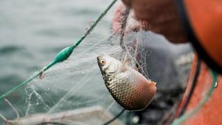 Am Bodensee bleiben die Netze leer