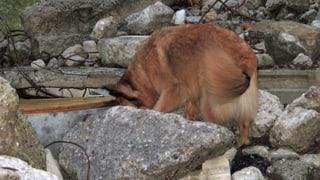Wo Rettungshunde den Ernstfall proben