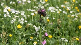 Der Bund will bei der Erhaltung der Artenvielfalt nachhelfen