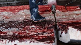 «Die meisten Japaner essen gar kein Walfleisch»