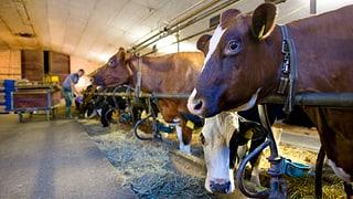 Bauern sind nach starkem Jahr bereits wieder unter Druck