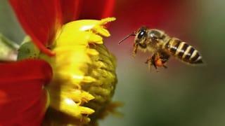 Pestizid-Verbot in der Schweiz umstritten